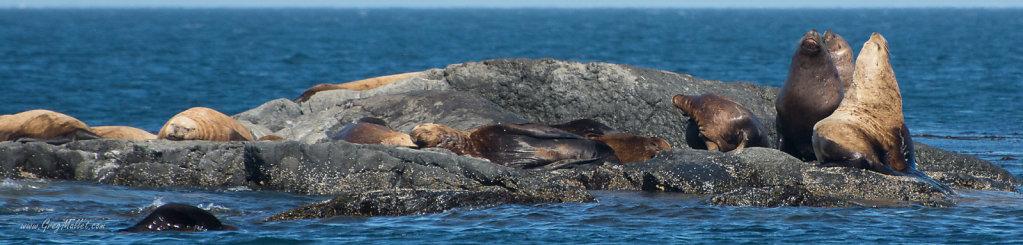Seals-2.jpg